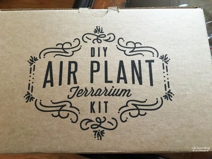 DIY Air Plant Terrarium Kit