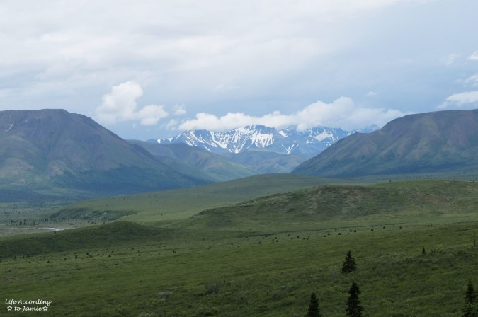 Denali National Park 2