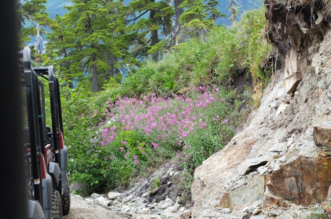 Takshanuk Mountain Trail - Fire Weed