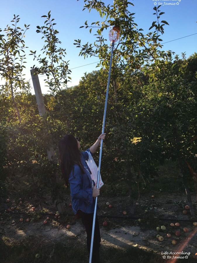 giamerese-farm-orchard-apple-picking-1