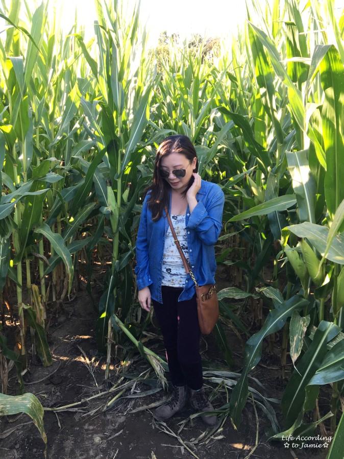 inside-corn-maze-2