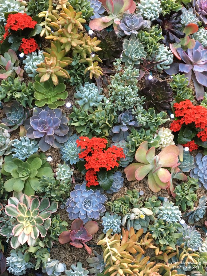 succulent-christmas-tree-close-up