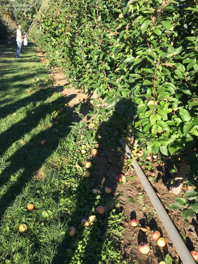 apple-orchard-shadows